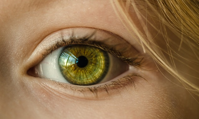 視力の低下・緑内障
